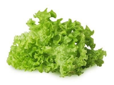 Salade Feuille de chêne verte - à la pièce
