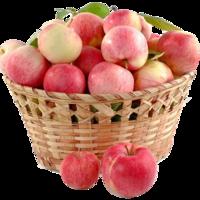 Image de la categorie Fruits de Les Halles chez Vous